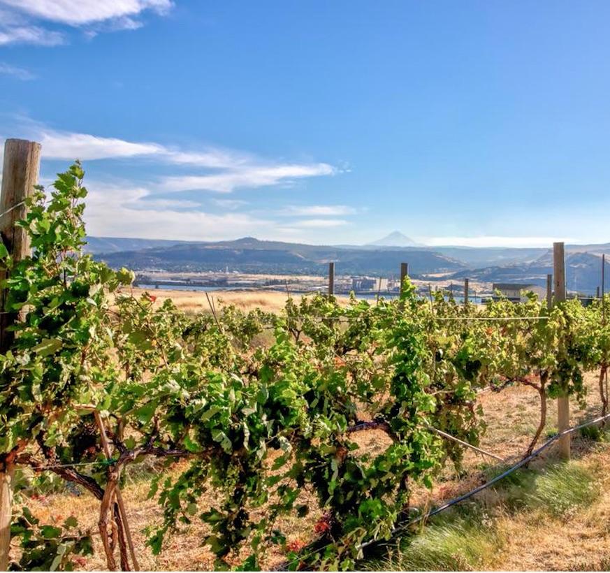 grapevine lodge washington vineyard