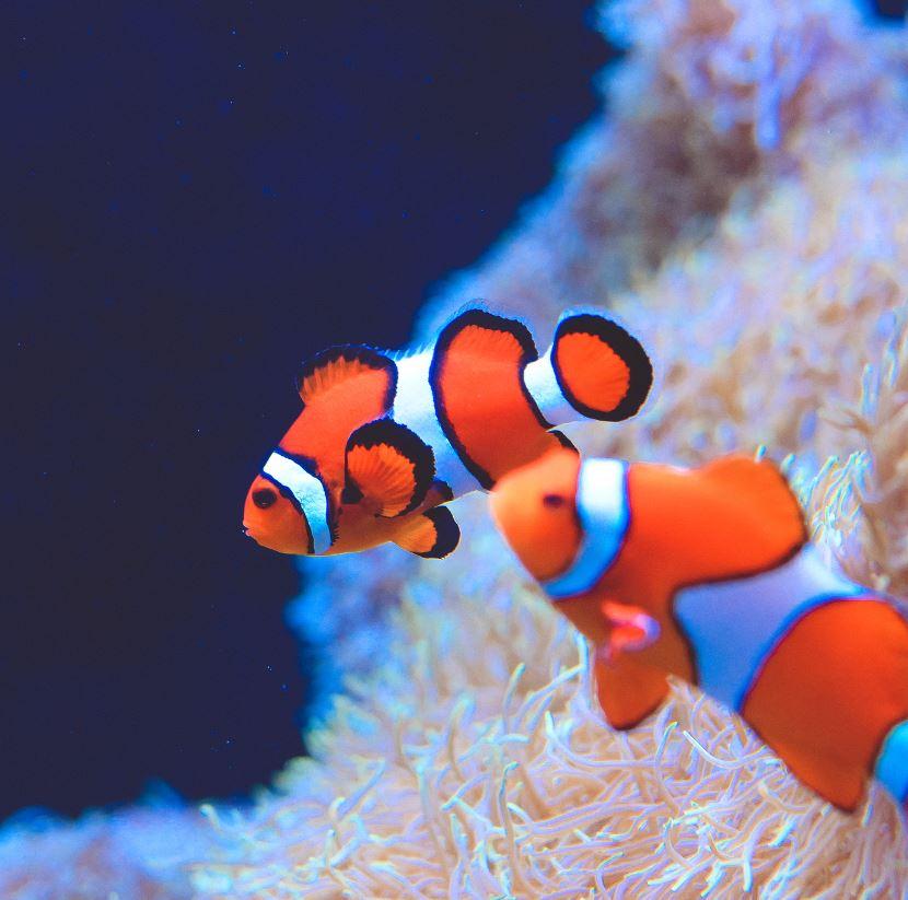 Explore The Seattle Aquarium