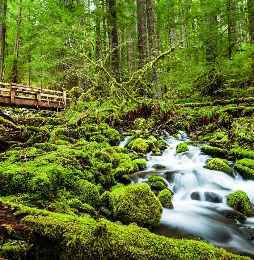 Sol Duc Falls Nature Trail