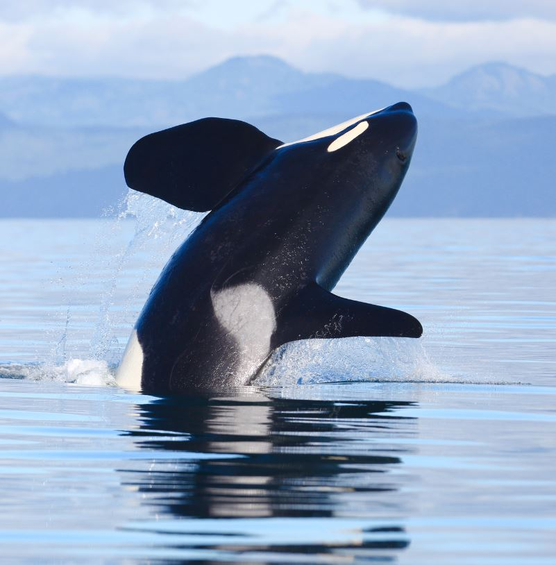 Go on a whale watching tour
