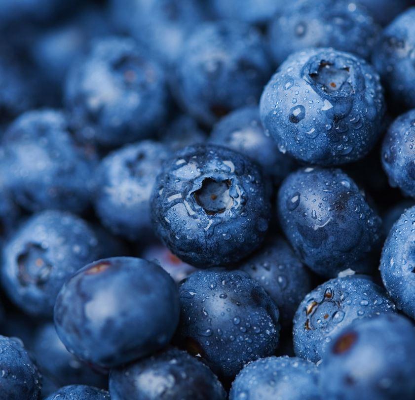 Wild Blue Berry Land (Maine)