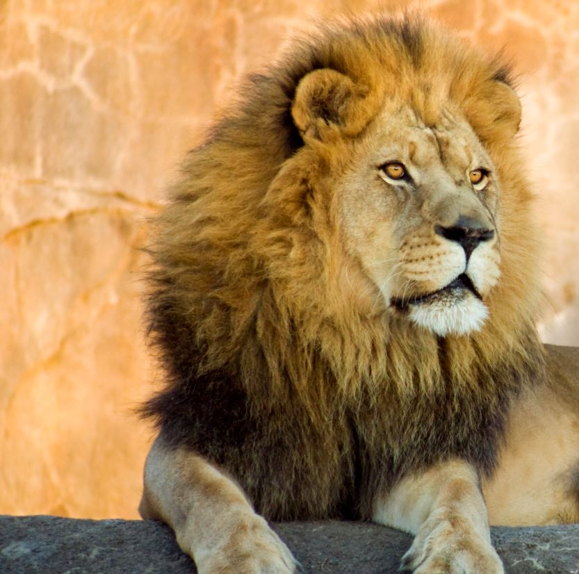 Spend a day at Woodland Park Zoo