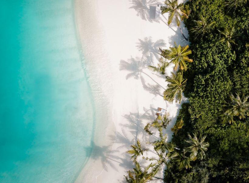 maldives beach palm trees