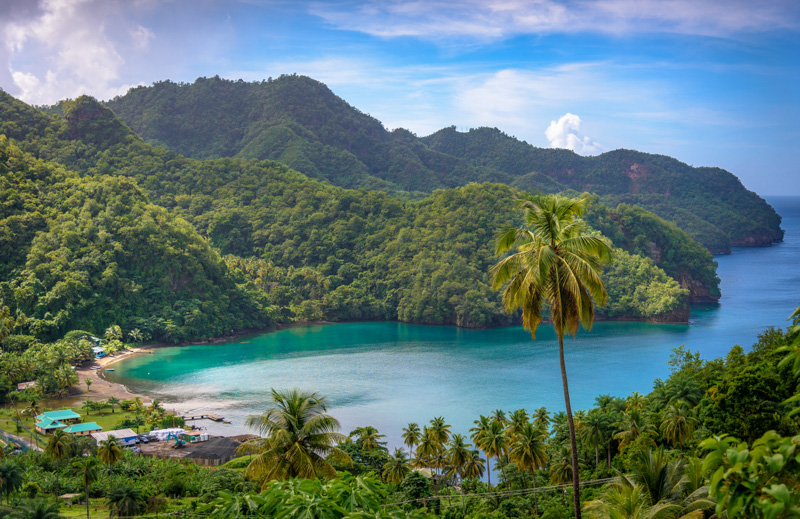 Sea and palm trees in Saint Vincent and the Grenadines