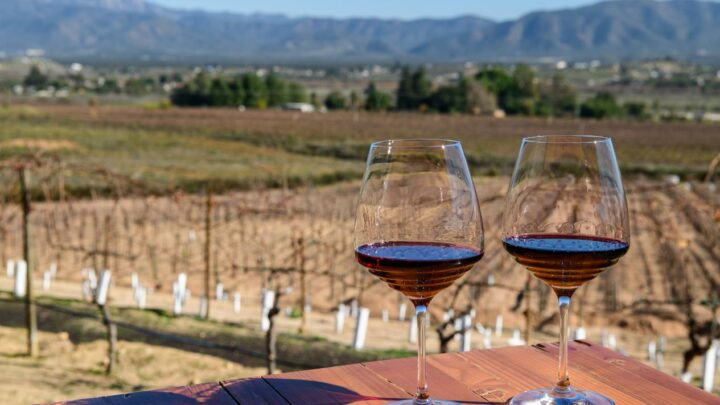 10 Things To Know About Visiting 'Valle de Guadalupe' Mexico's Wine Country