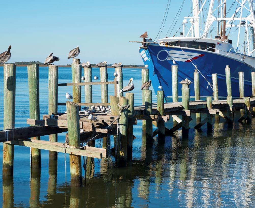 Birds and boat on water, Amelia Island
