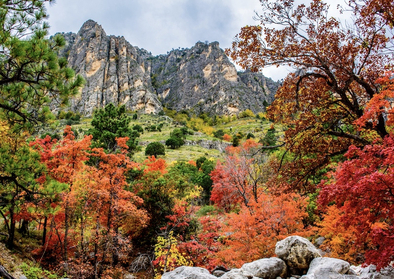 Autumn colors along Pine Canyon, Guadalupe Mountains National Park