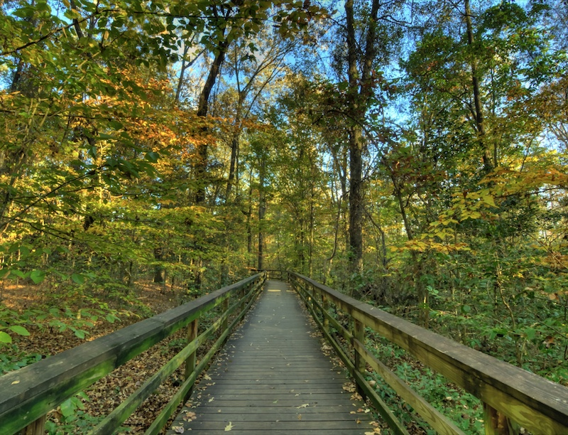Boardwalk at Congareee national forest