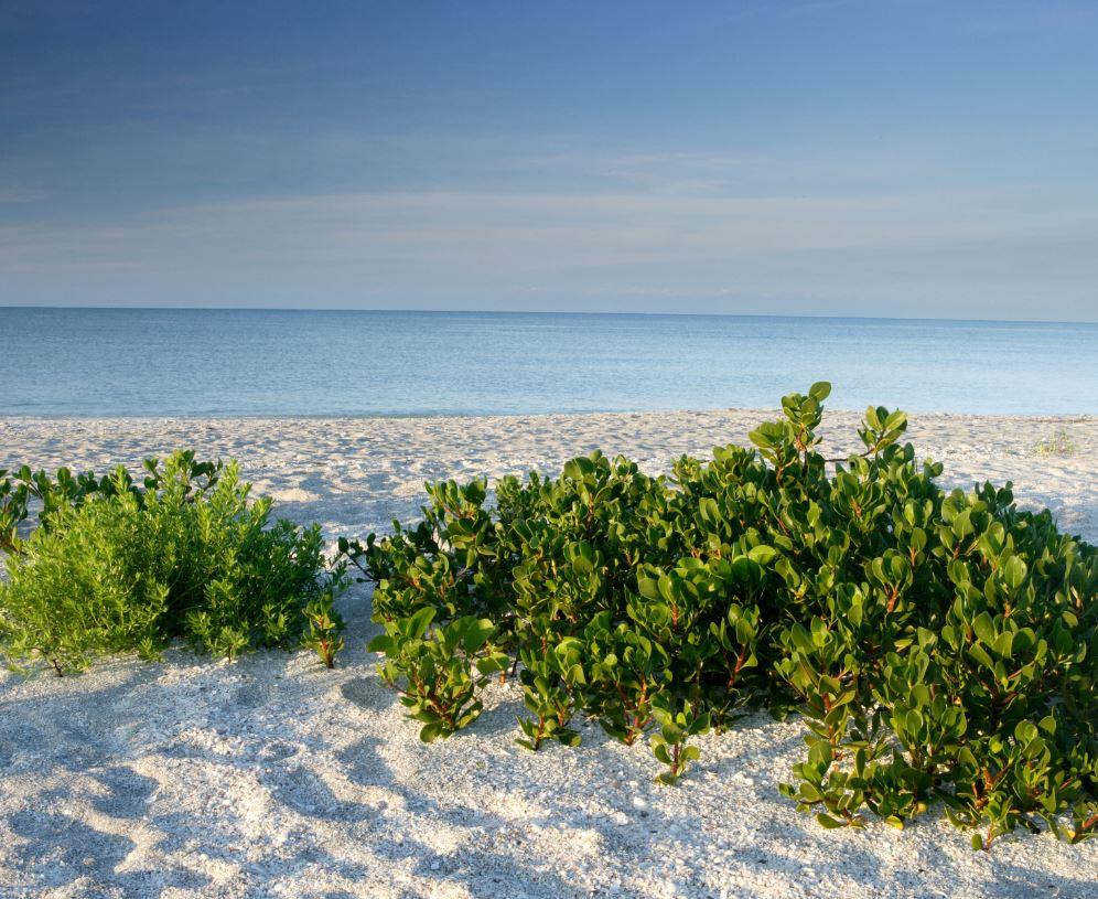 Bowman's Beach, Florida