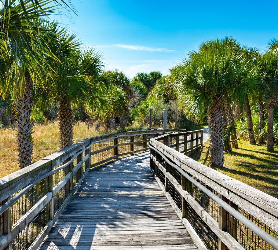 Wooden boardwalk and palm trees, Caladesi Island Florida