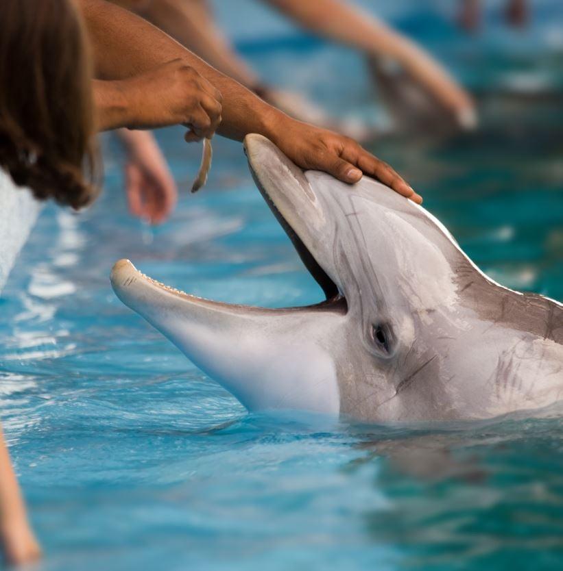 Visit Siegfried & Roy's Secret Garden And Dolphin Habitat