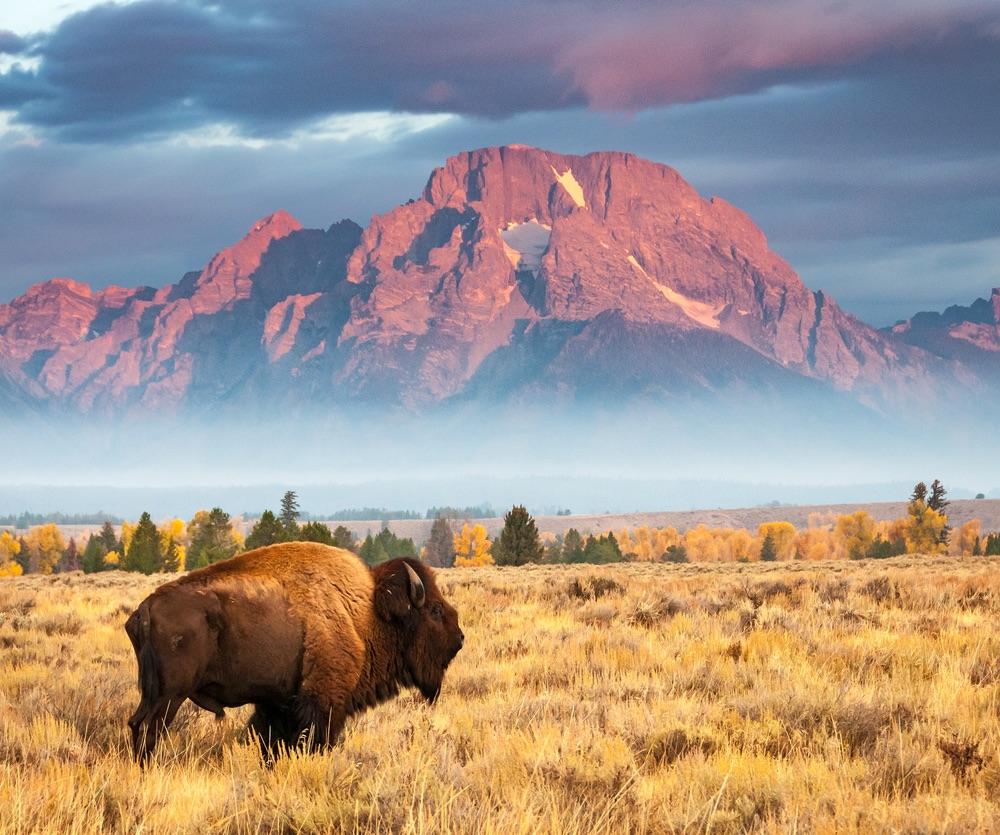 Grand Teton National Park Mount Moran.