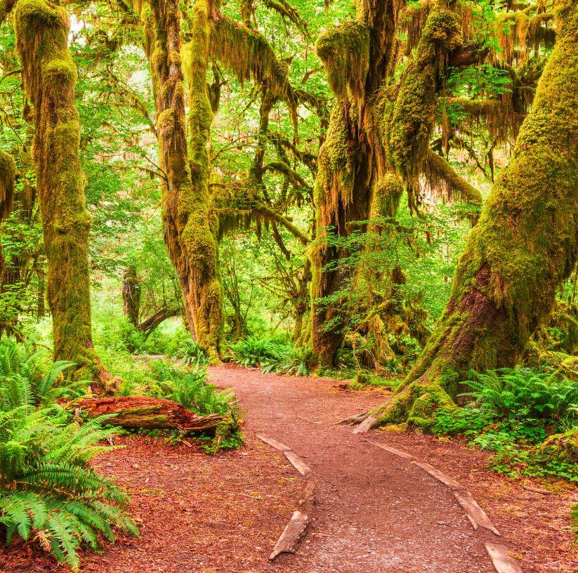 Visit A Rainforest