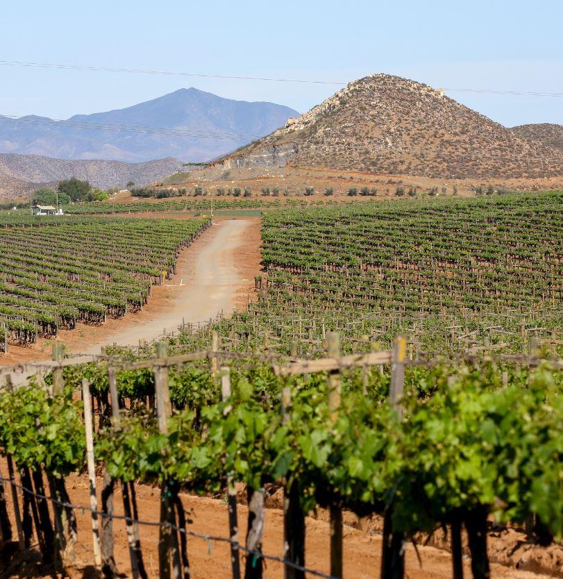 Mexico Vineyard in Baja California