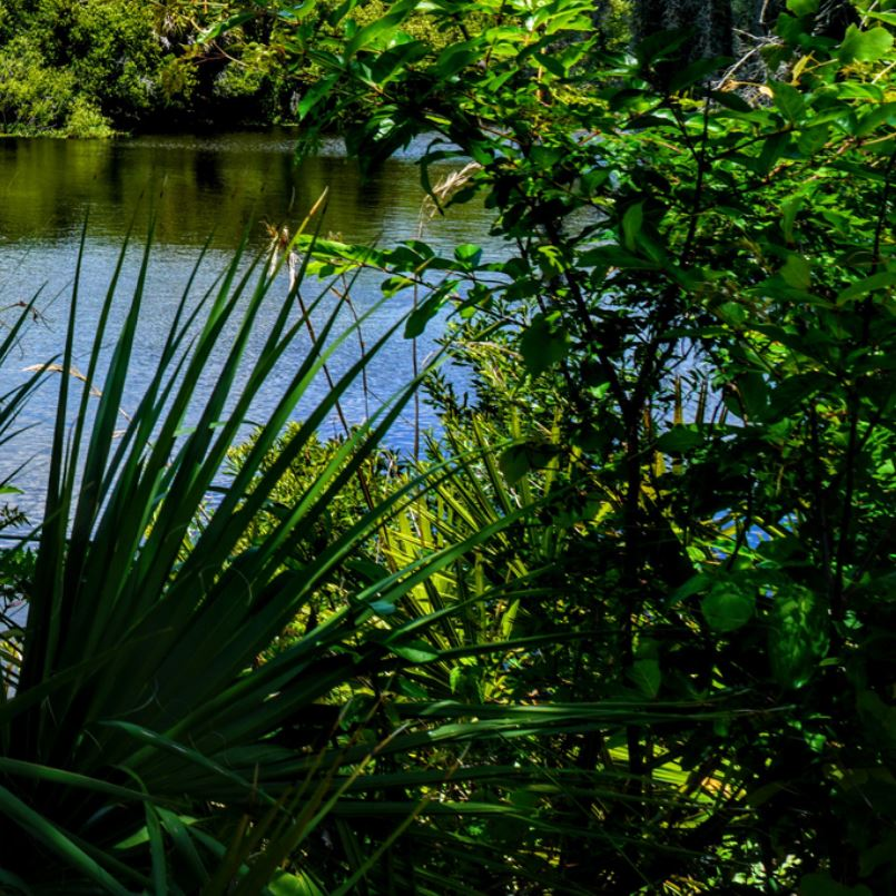 Warm Mineral Springs Park