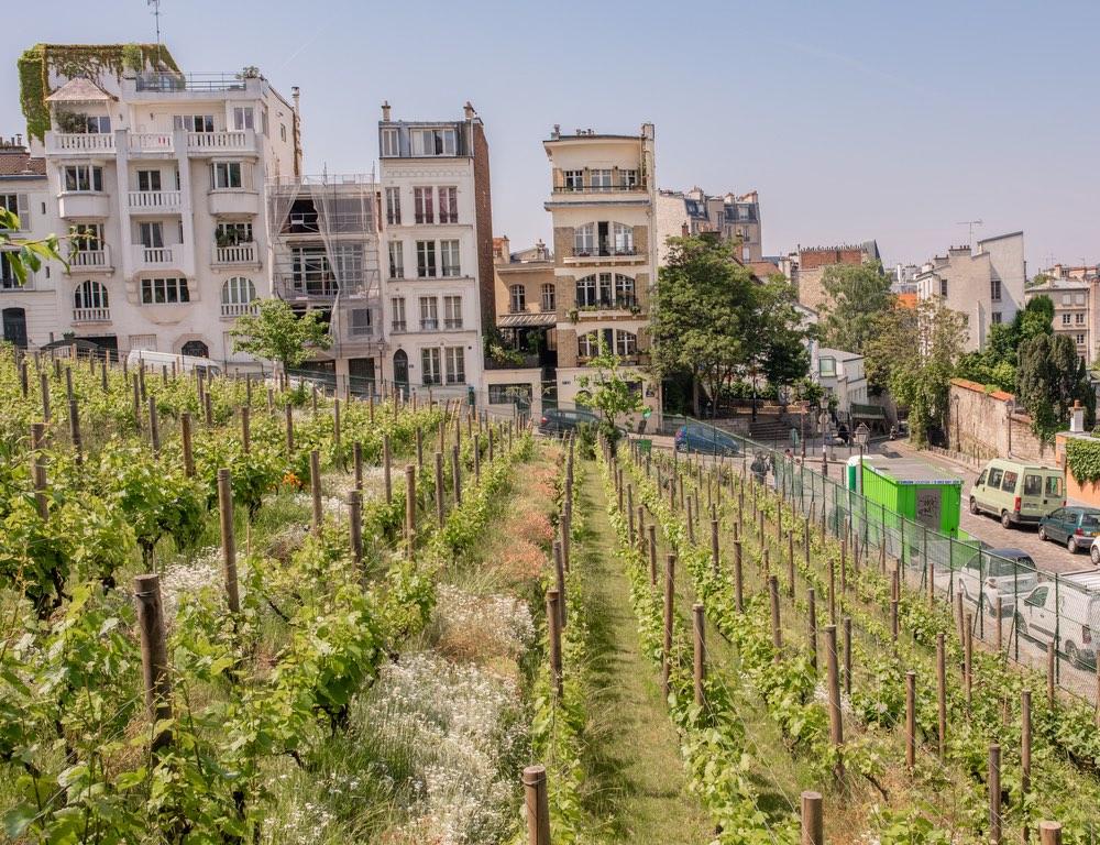 Montmarte Vineyards.jpg