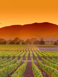 Napa Valley wine country.