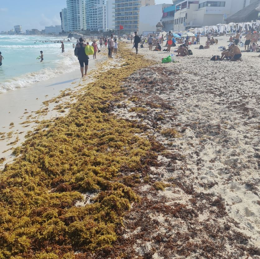 Sargassum building on beach during the day