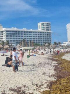 Seaweed Piles Up On Cancun Hotel Zone Beaches - What Visitors Need To Know