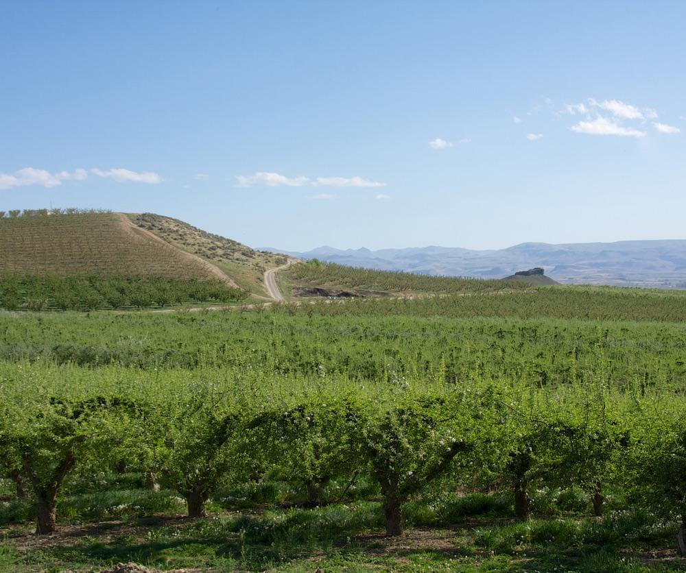 Snake River Wine Region.