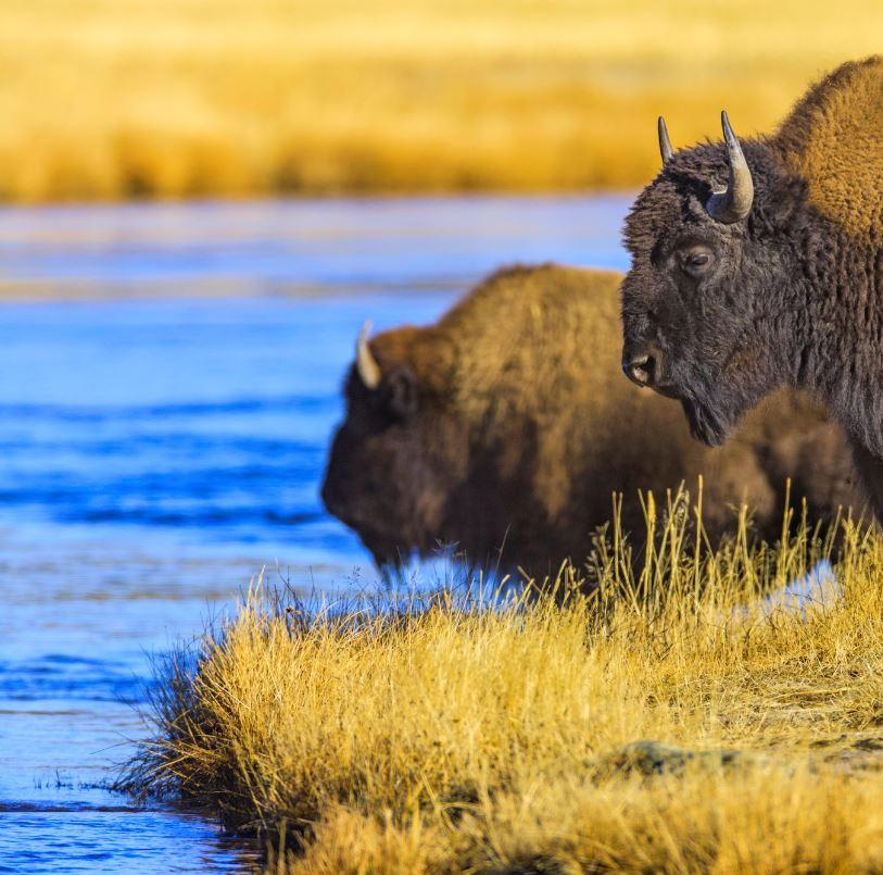 View Amazing Wildlife