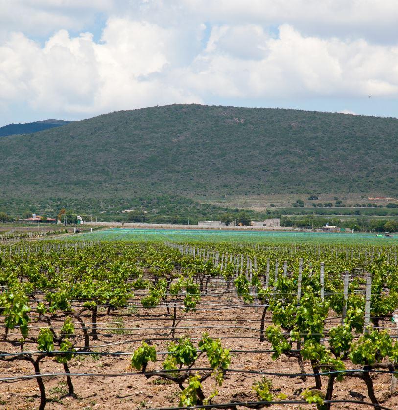 Wine In Baja California