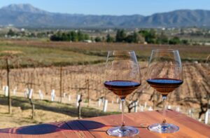 10 Things You Need to Know about Visiting Valle de Guadalupe Mexico's Wine Country