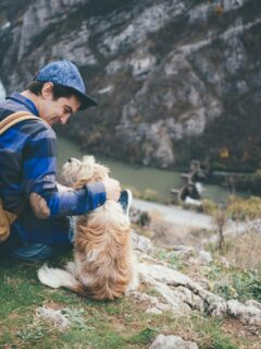 7 Dog-friendly destinations in the States to visit with your four-legged friend