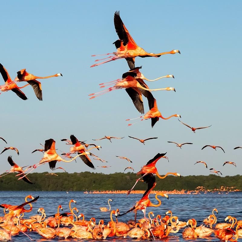 Celestun National Park, Yucatan, Merida, Mexico