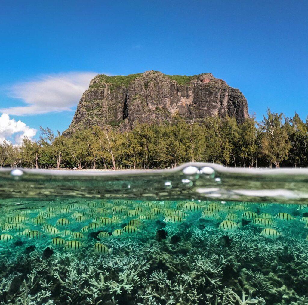 Mauritius Marine Life