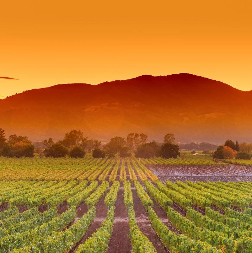 Napa vineyard and mountains at sunset
