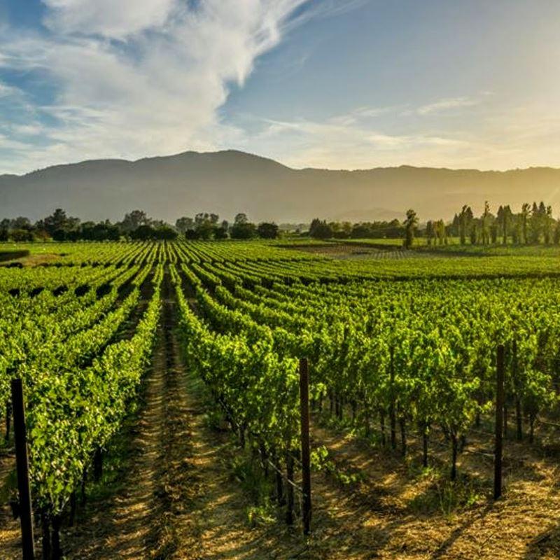 napa vineyard by day