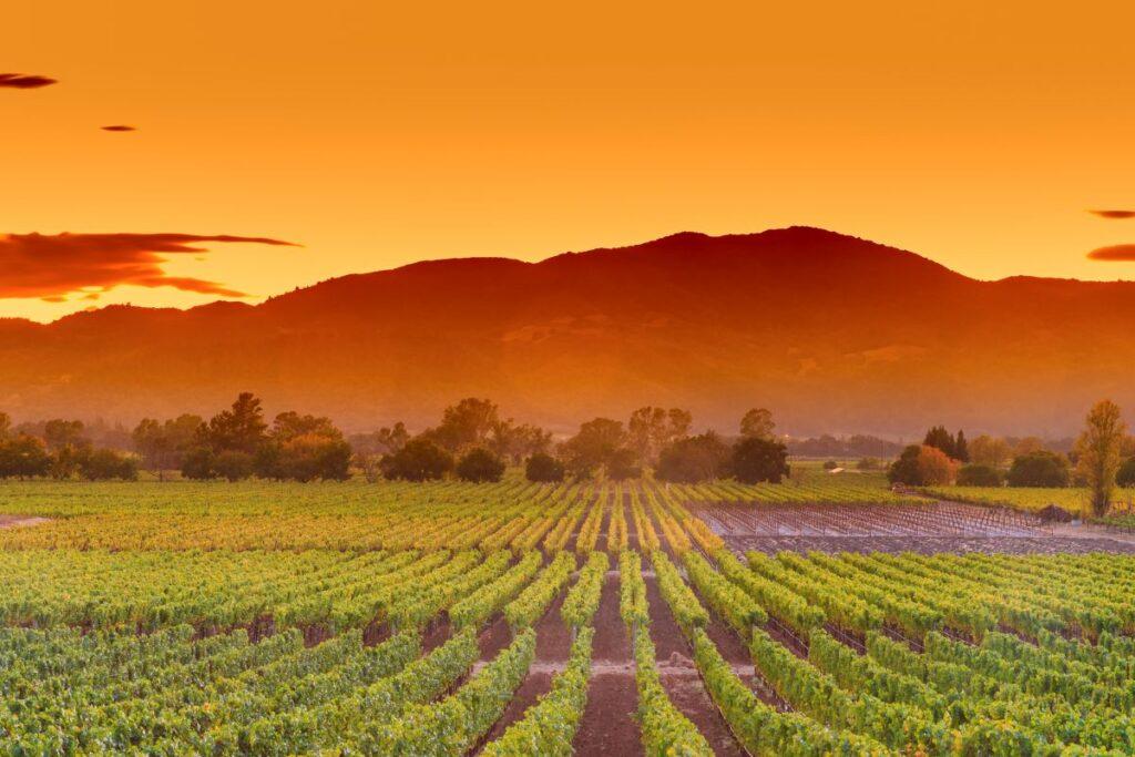 Seven Top Vineyards In California