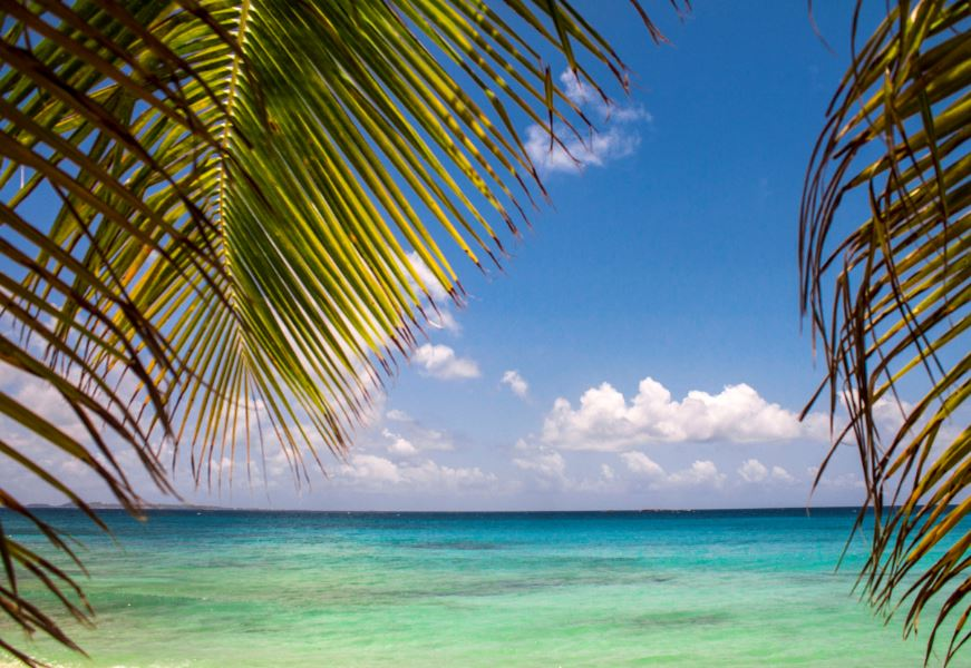 anguilla beach palm
