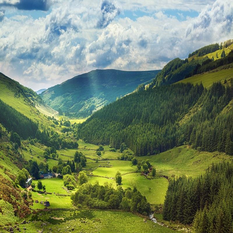Ireland Greenery