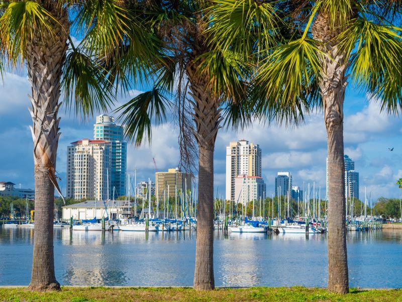 florida palm trees marina