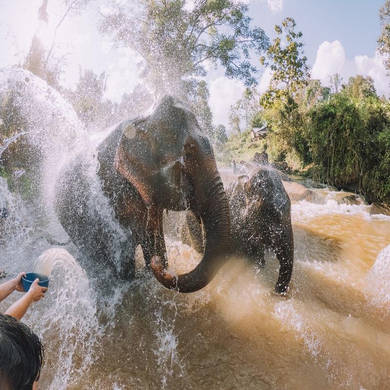 Elephants having a bath in the mud - Chang Mai