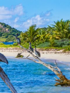 Grenada Is Now Only Allowing Vaccinated Travelers InTo The Country