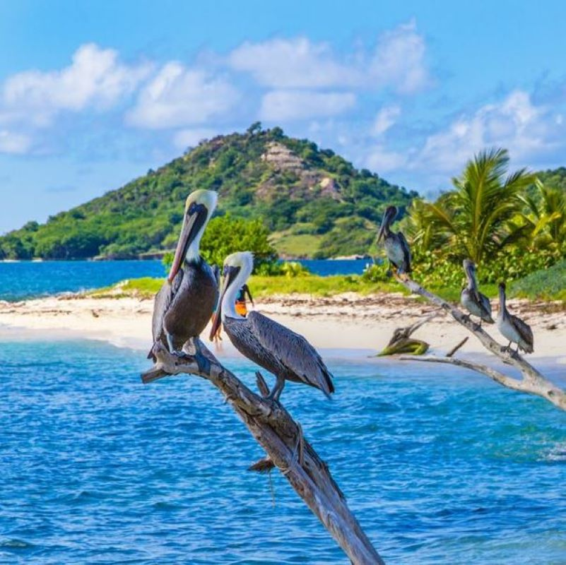 Grenada Is Now Only Allowing Vaccinated Travelers InTo The Country square