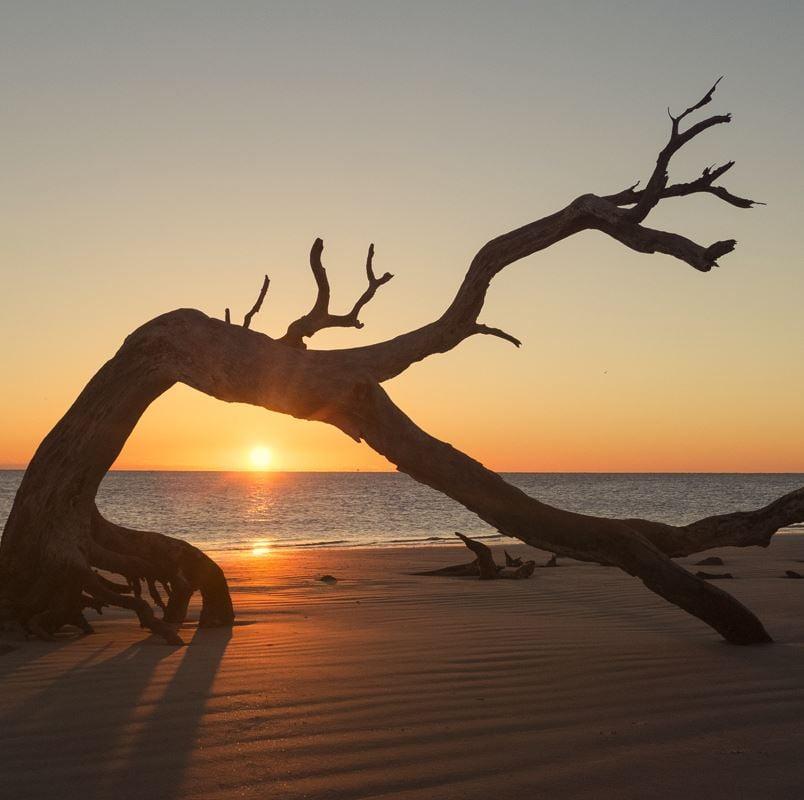 Jekyll Island Driftwood on beach at sunset