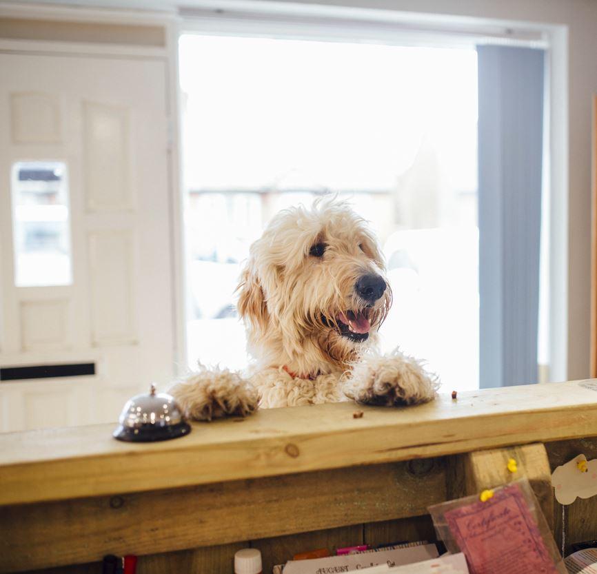 Find Pet Friendly Lodging