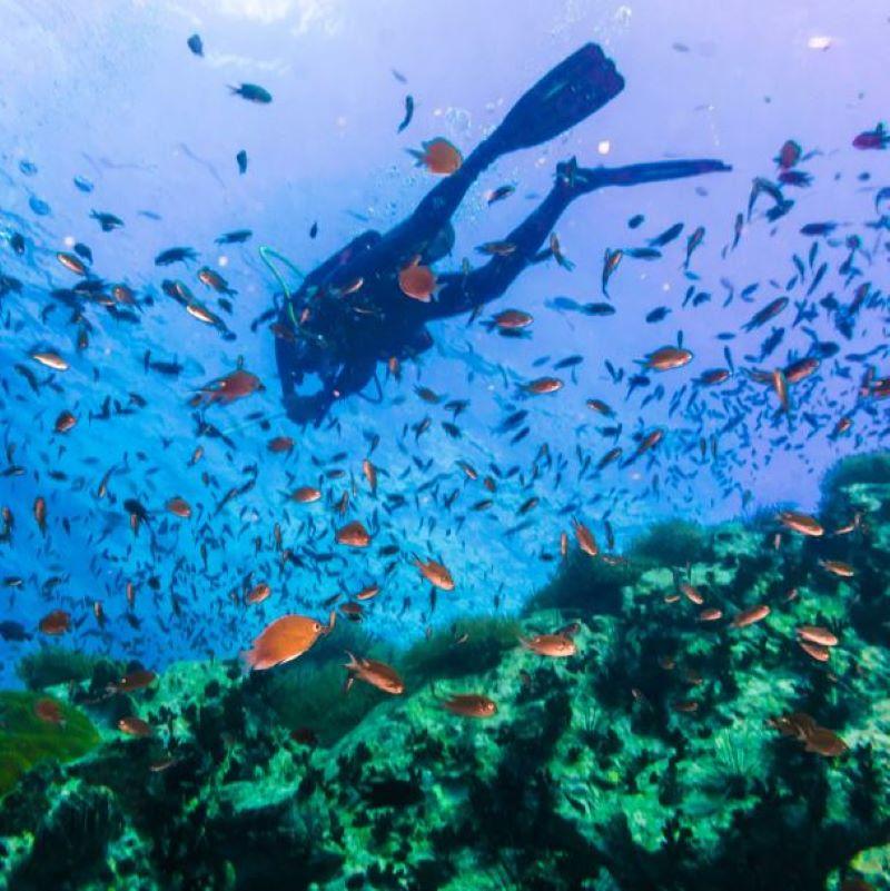 koh tao scuba diving thailand