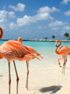 7 Reasons To Vacation in Aruba This Winter