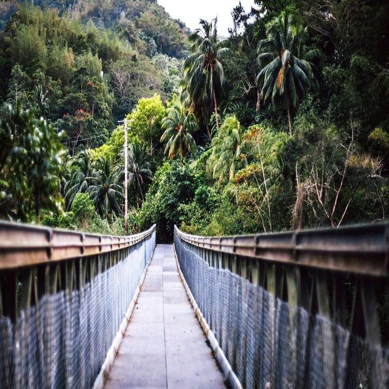 Bridge In Jamaica