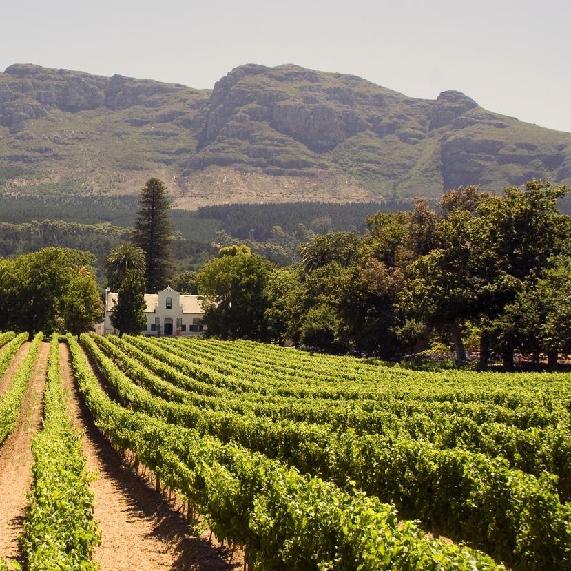 Cape Winelands, Vineyard and farmstead