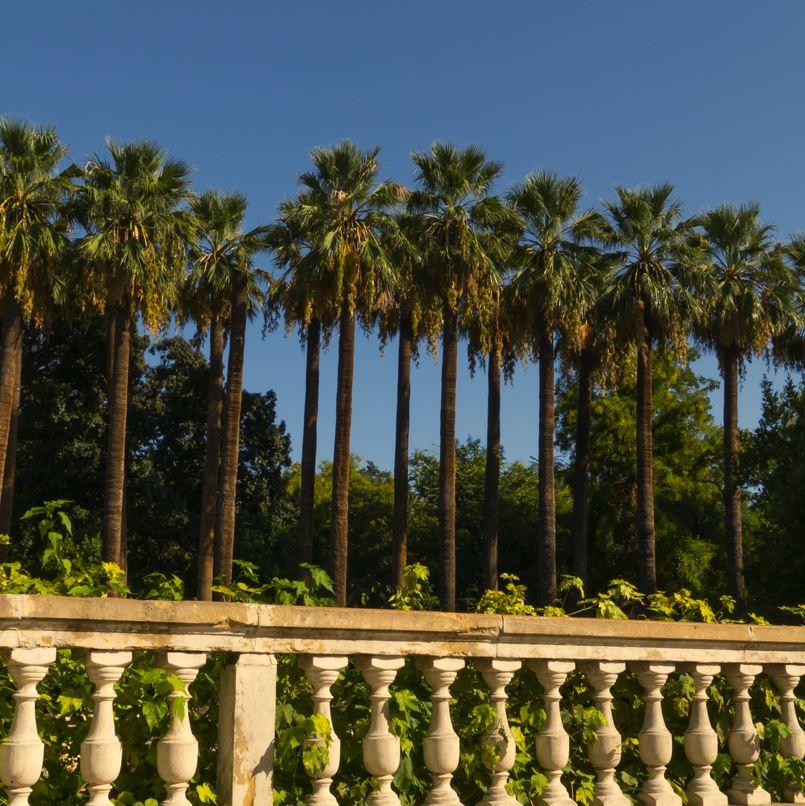 National Gardens, Athens Trees and sky