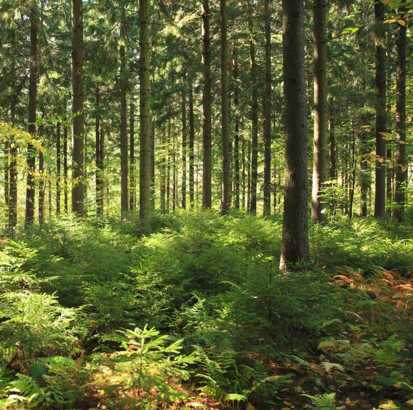 West Branch Nature Preserve