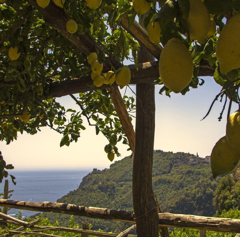 Amalfi lemons and sea view