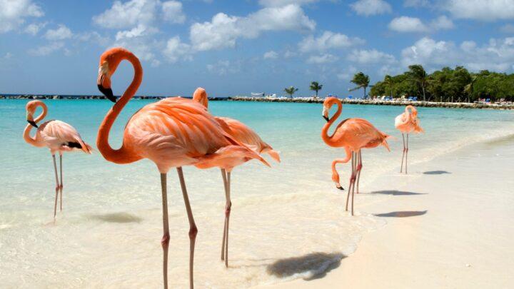 7 Reasons To Make Aruba Your Vacation Destination