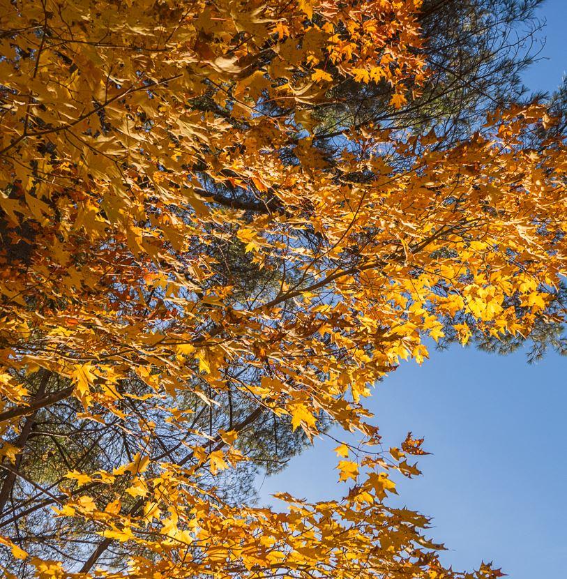 Fall Creek Valley Loop Trail